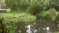Galápagos Islands - Galápagos tortoise