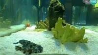 Pula - Fort Verudela - Aquarium